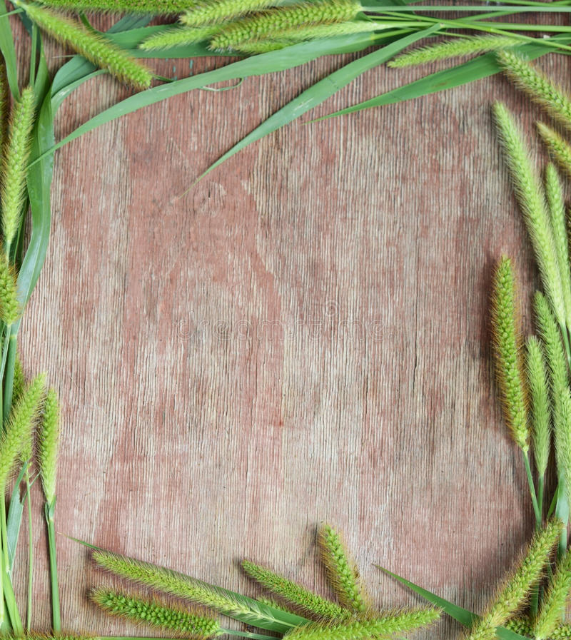 Grüne Ährchen auf dem Hintergrund des Holzes stockbilder
