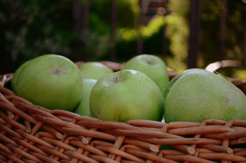 Grüne Äpfel im Korb lizenzfreies stockbild