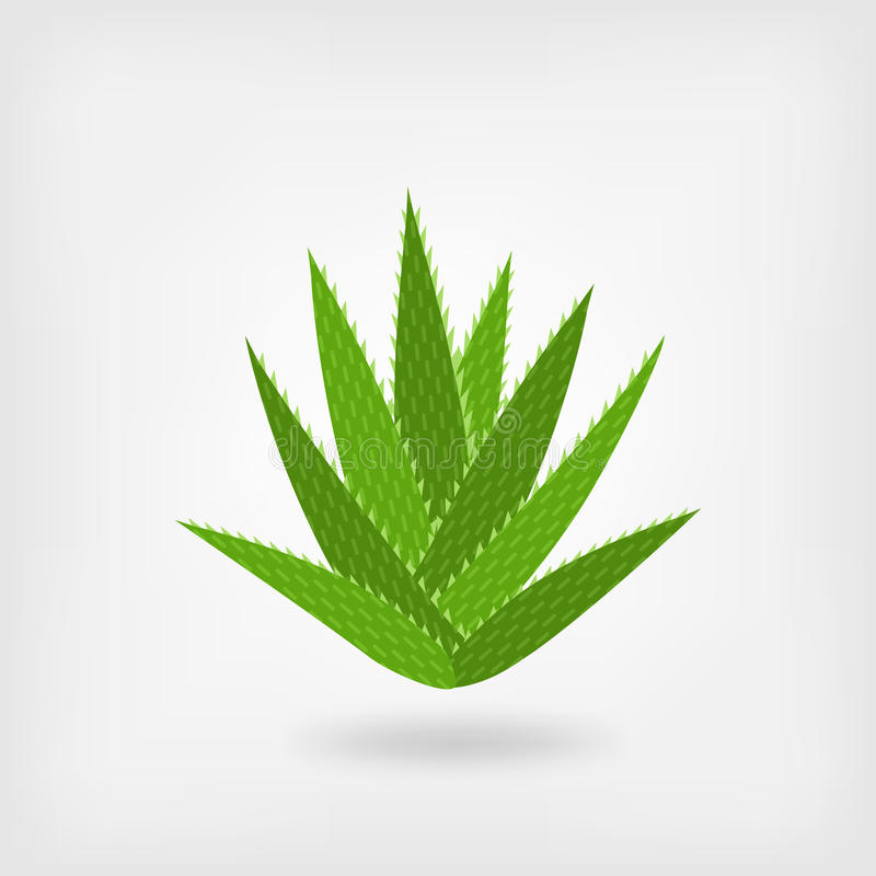 Grüne Aloe Vera stock abbildung