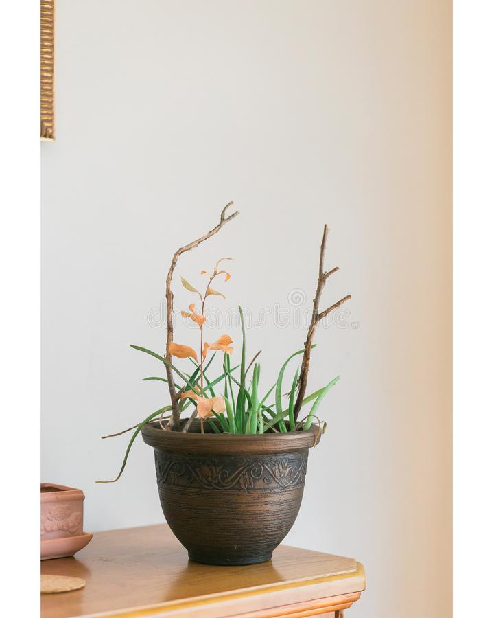 Grüne Aloe Vera-Pflanze mit braunem Keraminik-Pflanze lizenzfreies stockfoto