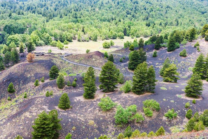 Grüne Bäume auf vulkanischer Erde auf Steigung von Ätna lizenzfreie stockfotos