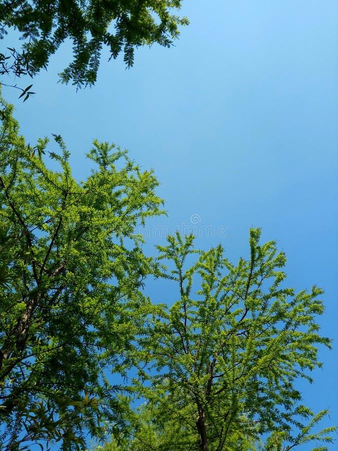 Grüne Bäume, blauer Himmel, Freizeit lizenzfreie stockfotografie