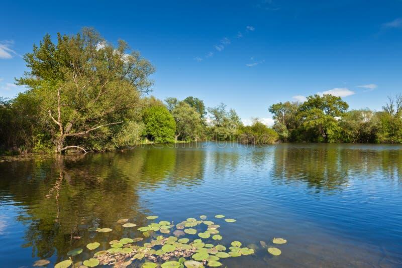 Grüne Bäume durch den See an einem sonnigen Tag lizenzfreie stockfotografie