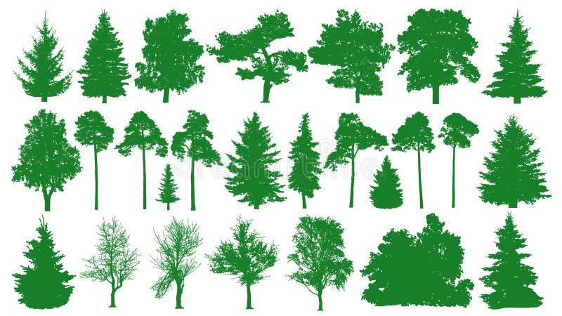 Grüne Bäume eingestellt Weißer Hintergrund Schattenbild eines Koniferenwaldtannenbaums, Tanne, Kiefer, Birke, Eiche, Busch, Niede stock abbildung