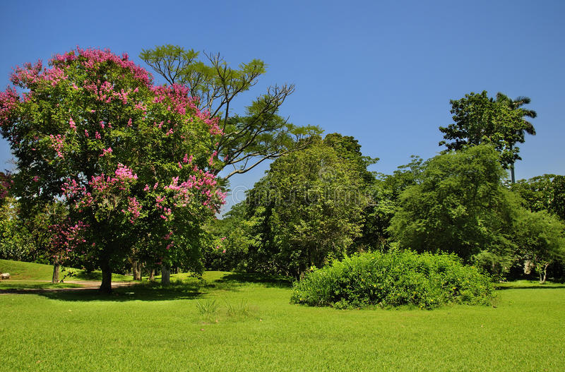 Grüne Bäume unter blauem Himmel stockfotografie