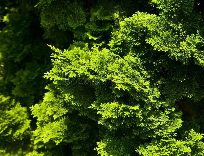 Download Grüne Büsche stockbild. Bild von busch, betrieb, grün - 12200089