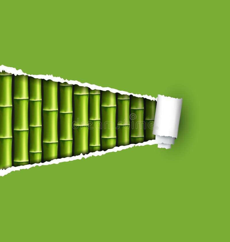 Grüne Bambuswaldung mit dem zerrissenen Papierrahmen lokalisiert auf Weiß stock abbildung