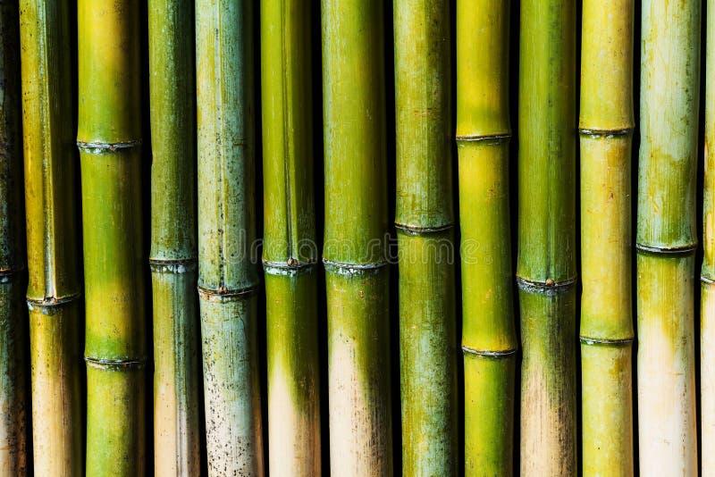 Grüne Bambuswand für strukturierten Hintergrund stockfotos