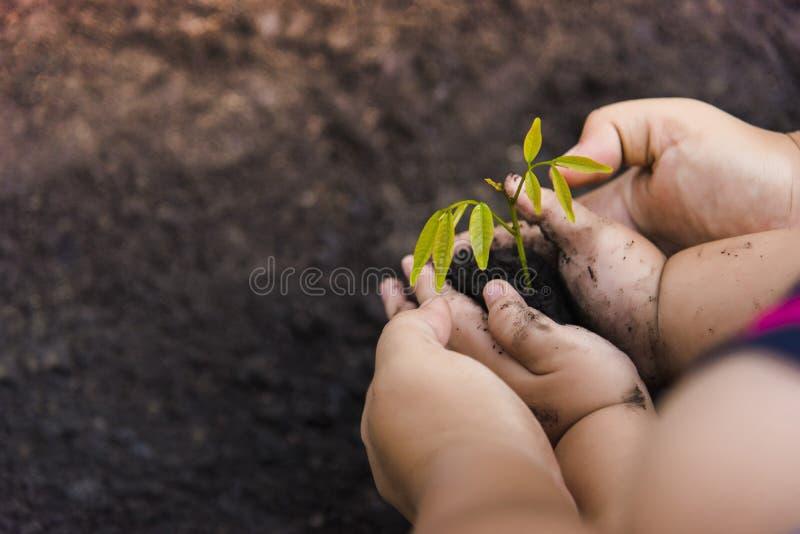 Grüne Baum-Pflanzenweltgrüne Bäume mit Geld, Rettungsgeld und den wachsenden Händen stockbild