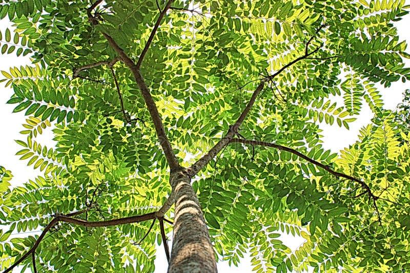 Grüne Baumnatur-Asien-Pop-Art stockfotos