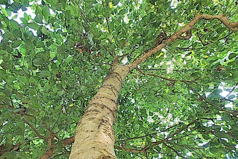 Grüne Baumnatur-Asien-Pop-Art stockbild