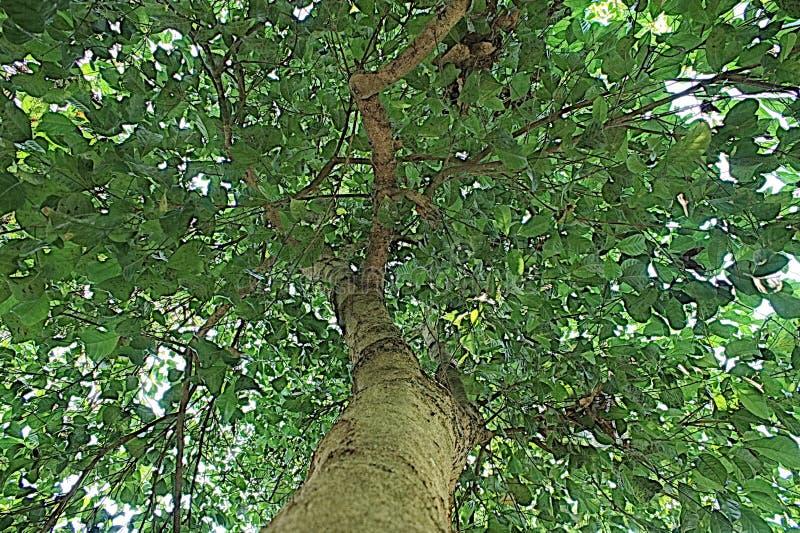 Grüne Baumnatur-Asien-Pop-Art stockfoto