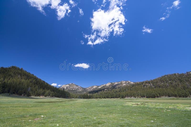 Grüne Bergwiese und blauer Himmel stockbild