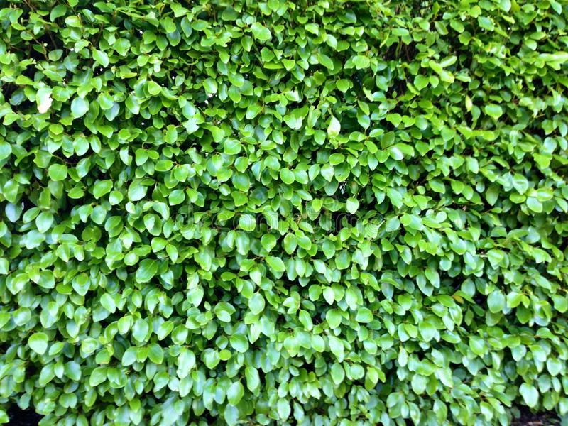 Grüne Beschaffenheit stockfotografie
