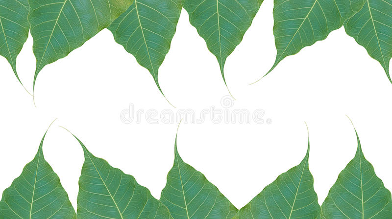 Grüne Blätter auf weißem Hintergrund lizenzfreies stockfoto