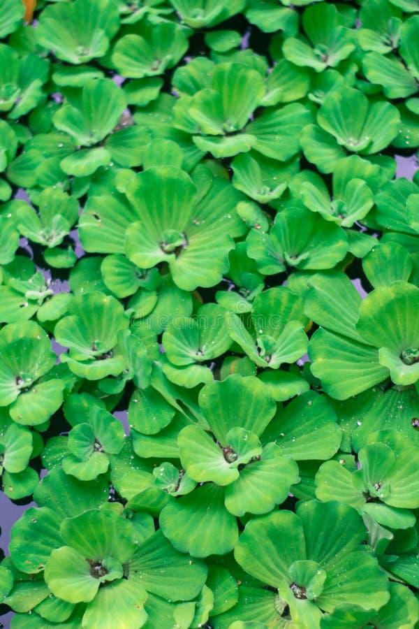 Grüne Blätter an den Riverbanks stockbilder