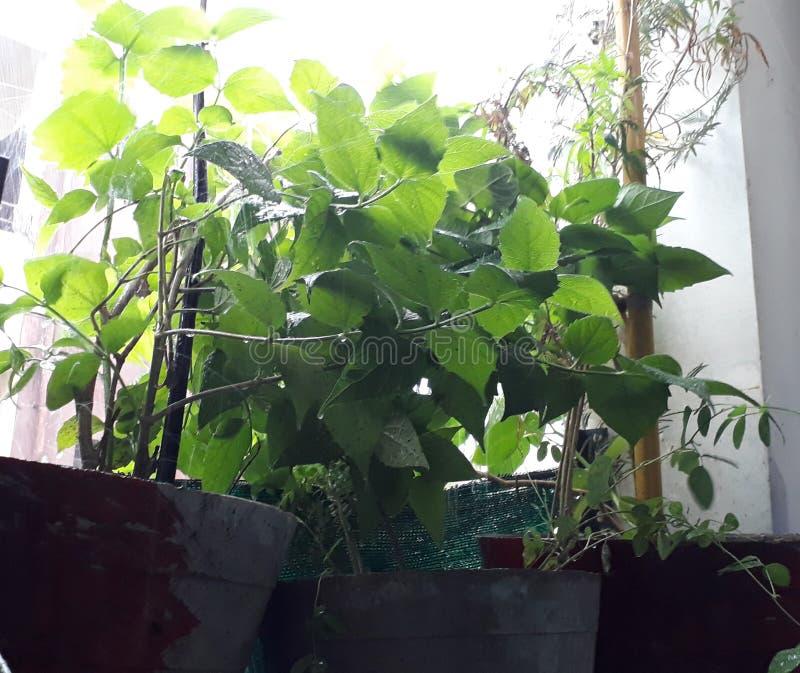 Grüne Blätter der Regen lizenzfreie stockfotos