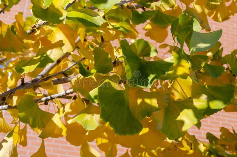 Grüne Blätter des Falles lizenzfreie stockfotografie
