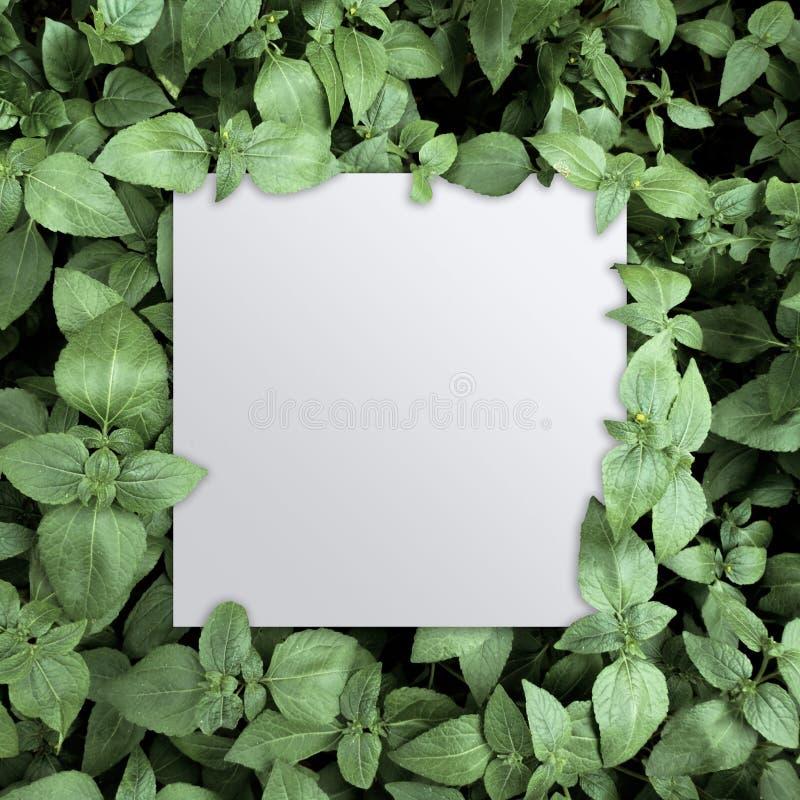 Grüne Blätter des tropischen Laubs mit Weißbuchhintergrund stockbilder