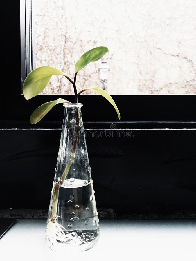 Grüne Blätter in einem Vase lizenzfreies stockfoto