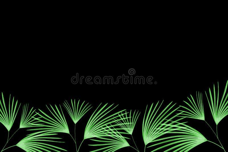 Grüne Blätter Muster, BlattPalme lokalisiert auf schwarzem Hintergrund lizenzfreie abbildung