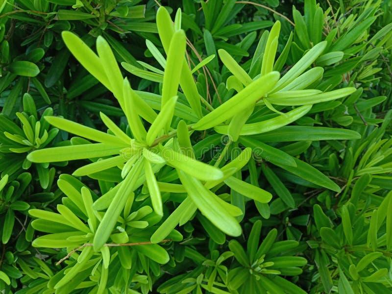 Grüne Blätter schließen oben schönes im Garten stockbild