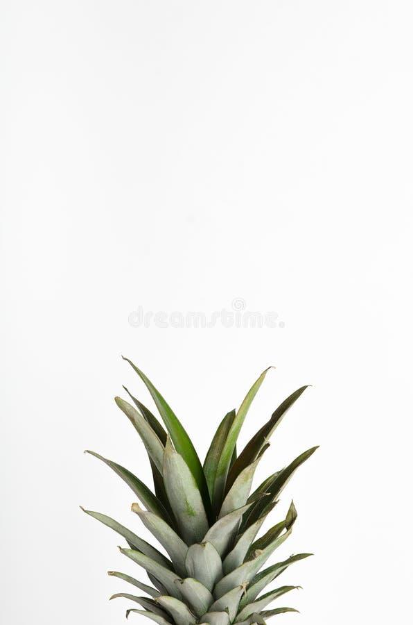 Gr?ne Bl?tter von Ananas, Spitzen, Gr?ns auf einem wei?en Hintergrund Tropische Sommerfrucht Kopienraum, minimale Zusammensetzung lizenzfreie stockfotografie