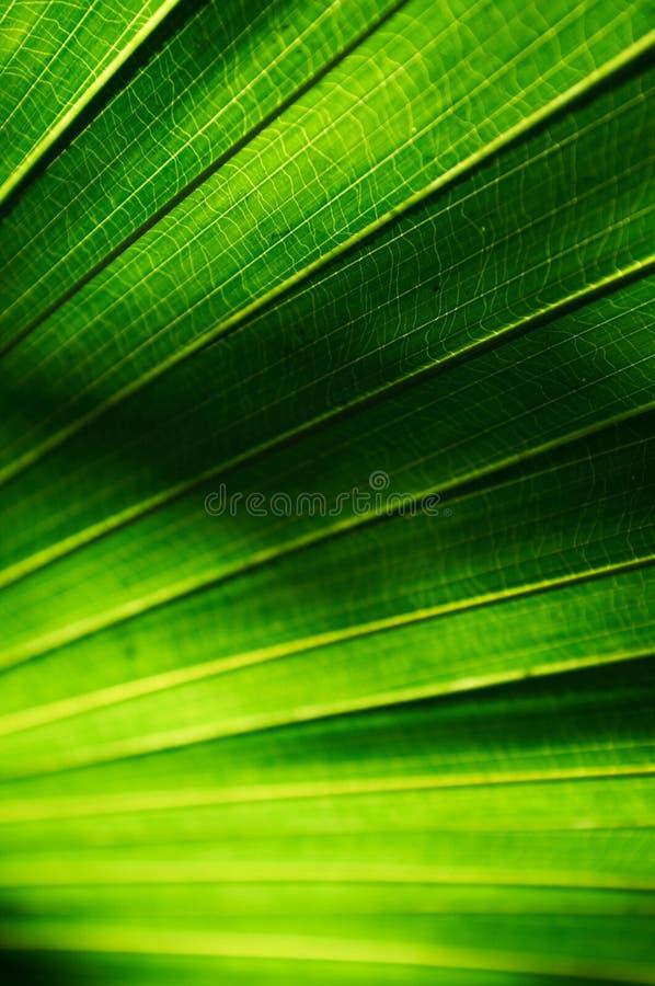 Grüne Blatt-Beschaffenheit stockfotografie