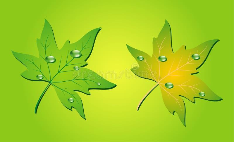 Grüne Blatt- und Wassertropfen stock abbildung