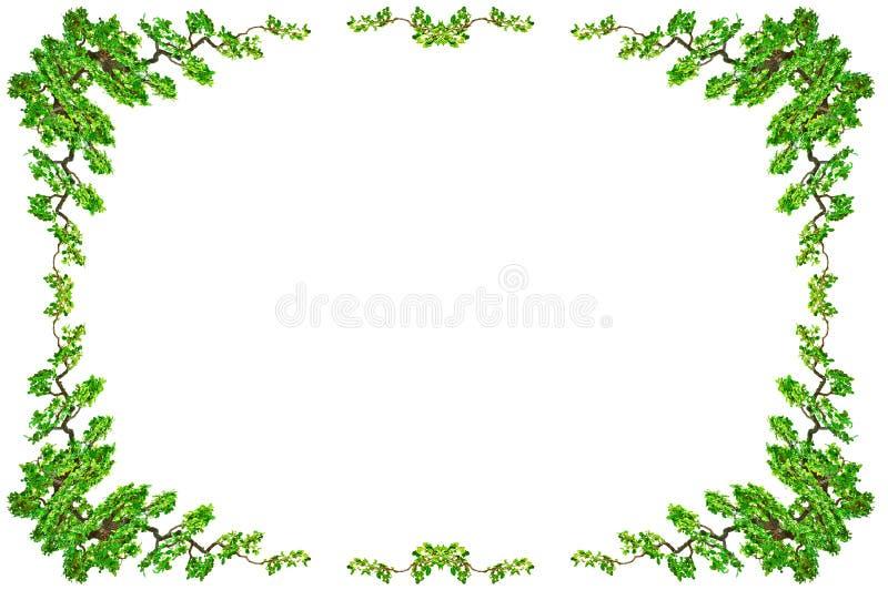 Grüne Blattgrenze lokalisiert auf weißem Hintergrund Beschneidungspfade I stockfoto
