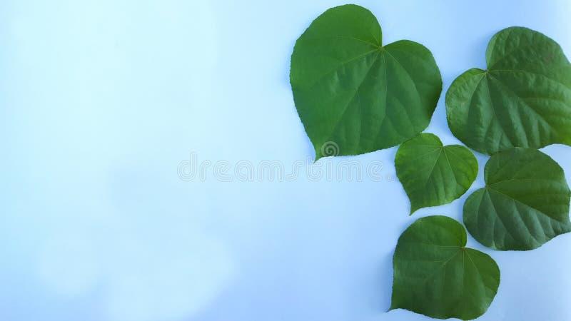 Grüne Blattgrenze lokalisiert auf weißem Hintergrund lizenzfreies stockbild