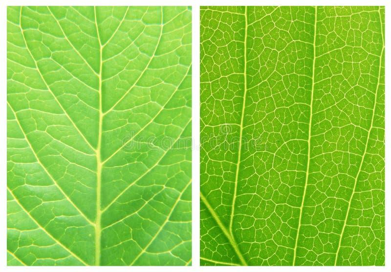 Grüne Blatthintergrundmuster stockfotos
