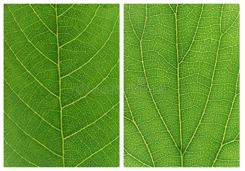 Grüne Blatthintergrundmuster lizenzfreie stockfotografie