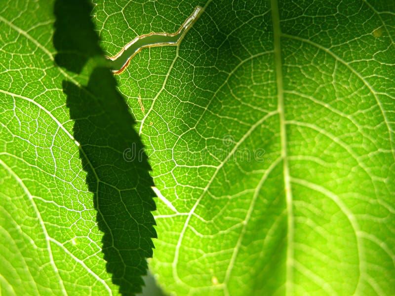 Grüne Blattnahaufnahme 1