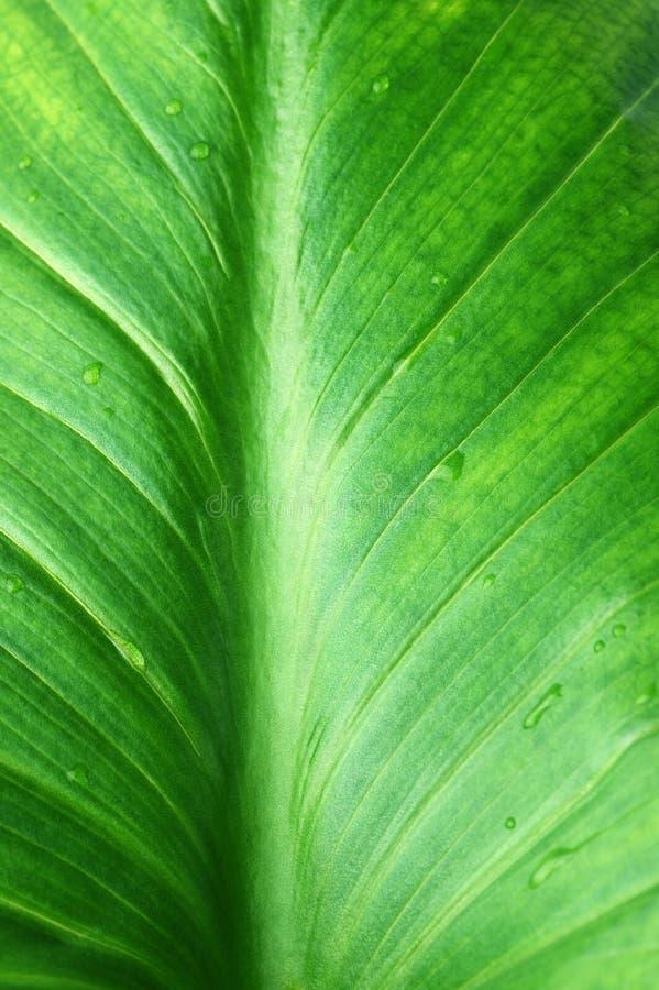Grüne Blattnahaufnahme stockbild