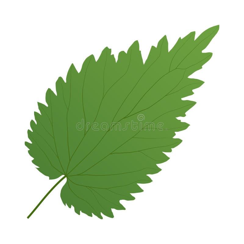 Grüne Blattnessel lizenzfreie abbildung