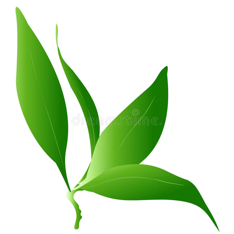 Grüne Blume vektor abbildung