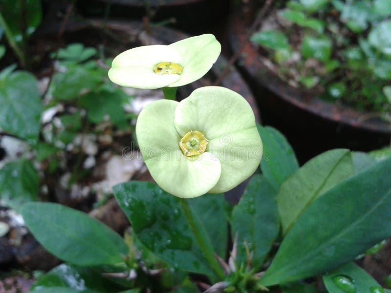 Grüne Blume stockbilder