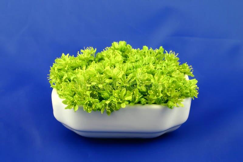 Grüne Blumen auf dem Blau stockfotos