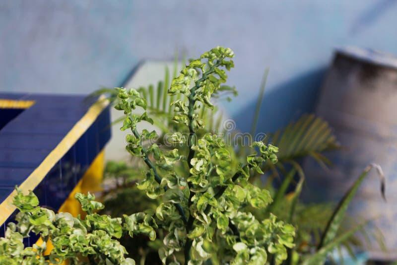 Grüne Blumenanlagen im Hausgarten stockbild