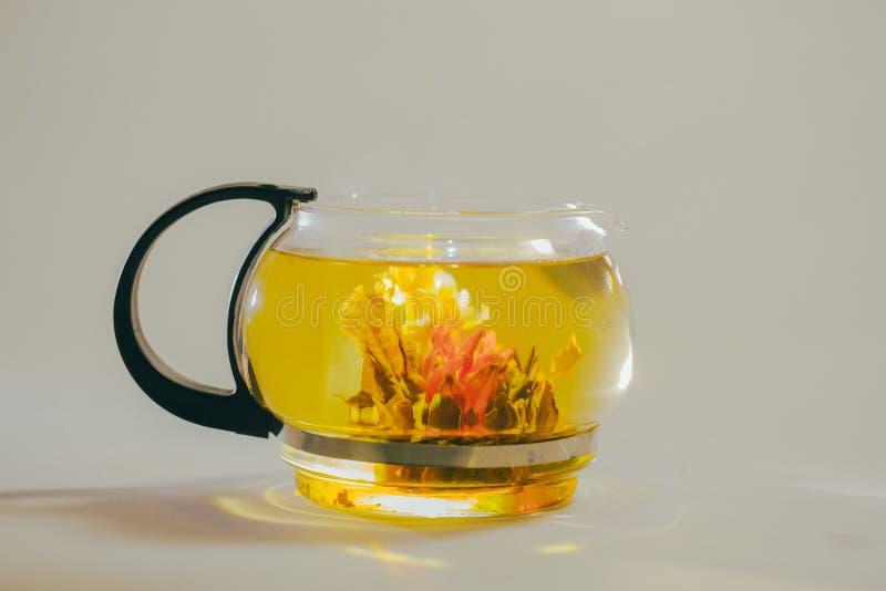 Grüne chinesische Teeblumenknospe, die in der Glasteekanne blüht Auf weißem Hintergrund stockbilder