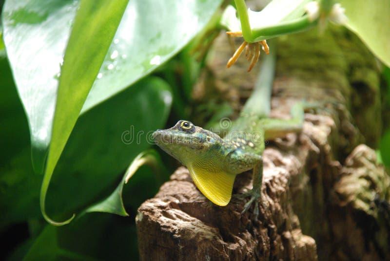 Grüne Eidechse, die auf einem Klotz sitzt stockfotos