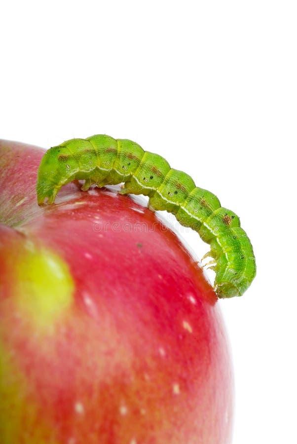 Grüne Endlosschraube, die über den roten Apfel kriecht lizenzfreies stockfoto