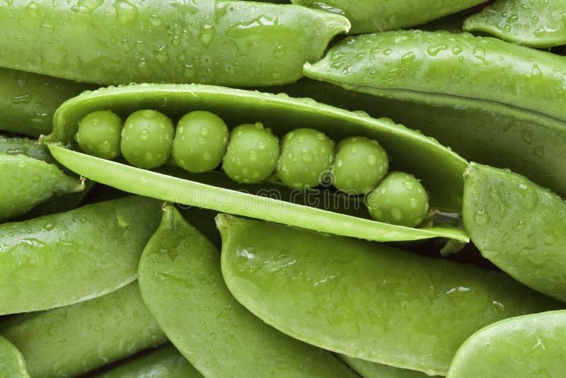 Grüne Erbse lizenzfreies stockfoto
