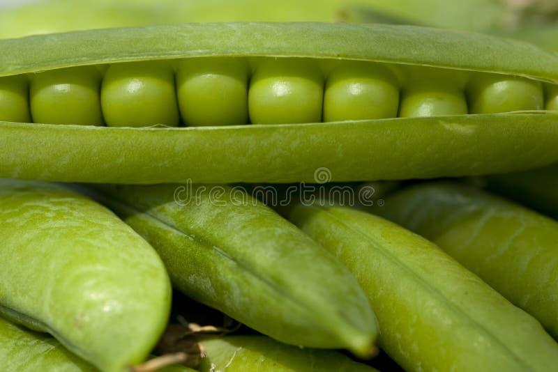 Grüne Erbsen stockbilder