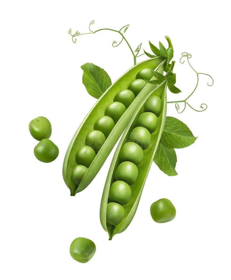 Grüne Erbsen in den Hülsen mit den Sprösslingen lokalisiert auf weißem Hintergrund stockbilder