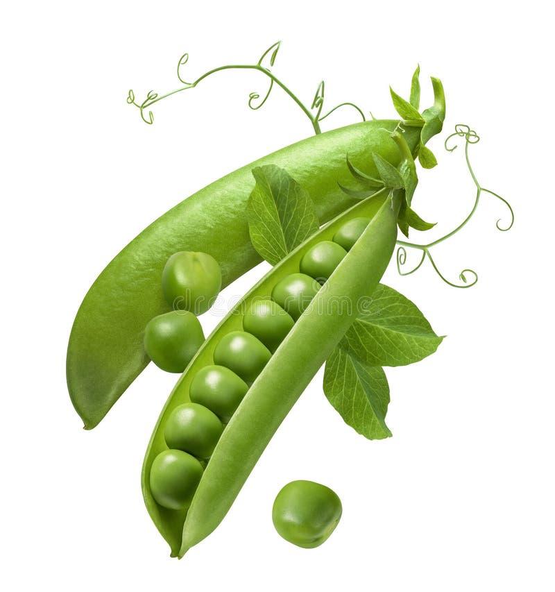 Grüne Erbsen in der offenen Hülse lokalisiert auf weißem Hintergrund lizenzfreies stockfoto