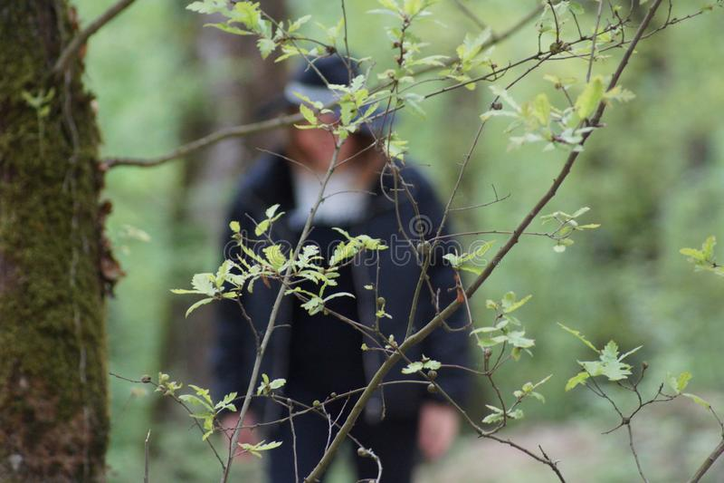 Grüne Farbe im Wald stockfotos
