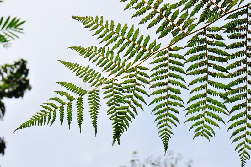 Grüne Farn-Blätter Stockfotos