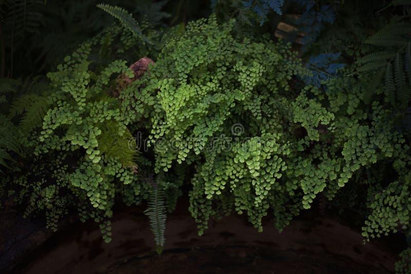 Grüne Farnblätter lizenzfreies stockbild
